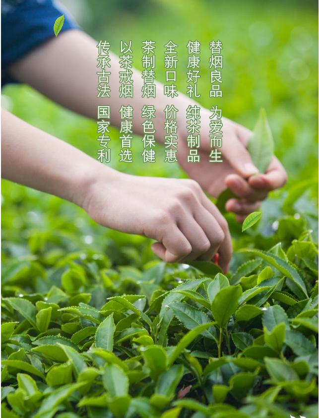 金叶茶细支(详情设计(切片2.jpg